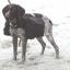 Seljakott koerale, suurus L
